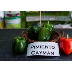 Pimiento CAYMAN HM Clause x...