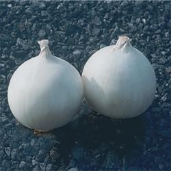 Cebolla blanca temprana...