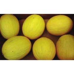 Melon Amarillo AMARAL RZ F1...